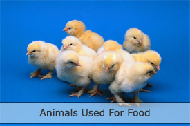 Animals used for food
