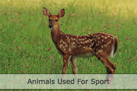 Animals used for sport